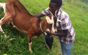 Diary goats updates